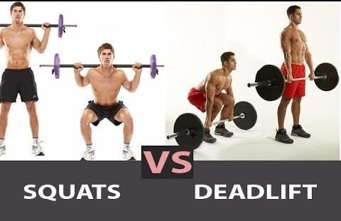squat vs deadlift